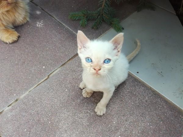 Котята в добрые руки! кот, Помощь, в добрые руки, заберите, милота, длиннопост, Самара, отдам в хорошие руки