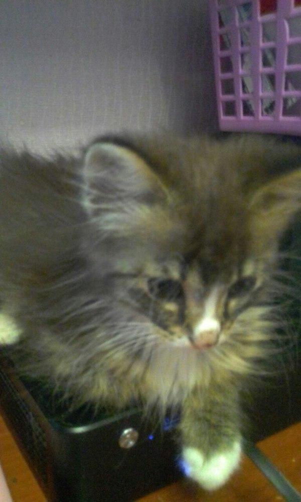 Петербуржец, приюти кошку! Санкт-Петербург, помощь животным, отдам в хорошие руки, бездомный котик, длиннопост, кот, помощь, в добрые руки