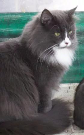 Про кошку Кот, крыса, подарок