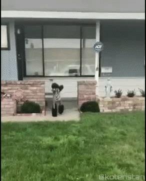 Мой хозяин идиот Собака, зебра, эксперимент, гифка