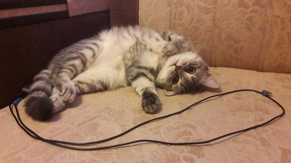 Когда коты более харизматичные, чем ты кот, котомафия, домашние животные, милота, упоротость, длиннопост