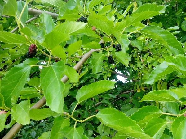 Уххх Что за фрукт?, Растения, Что ты такое, Отпуск, Длиннопост