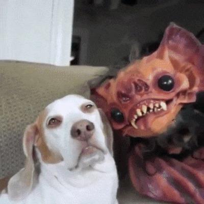 Собаке неважно как ты выглядишь, она любит тебя любого :)