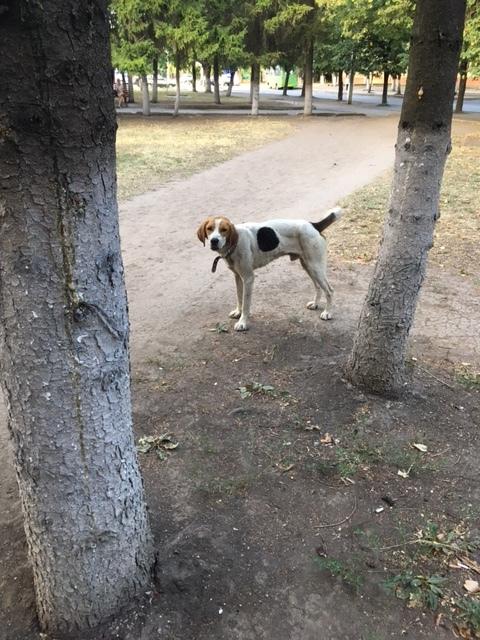 Найдена собака Харьков Собака, Харьков, найдена собака, сила пикабу