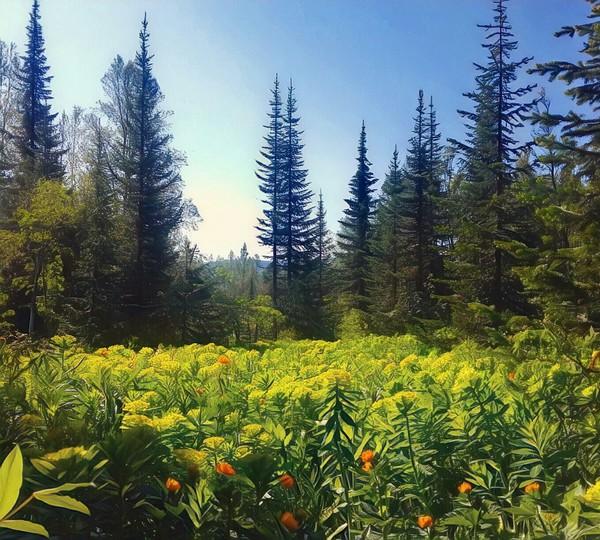 Тайга Природа, тайга, фотография, лес, природа России