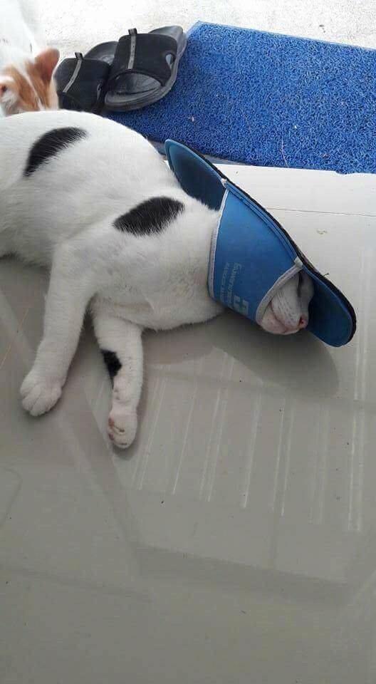 Кот играл с тапком и проиграл