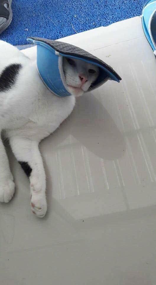 Кот играл с тапком проиграл