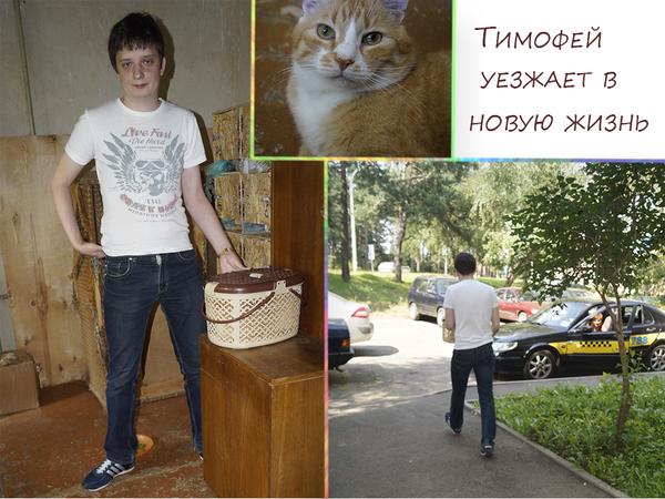Хорошие события кот, помощь животным, пристройство, котомафия, Минск, длиннопост