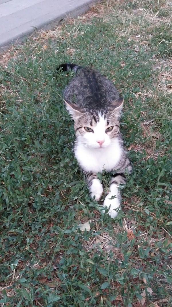 Милая и любопытная кошка.
