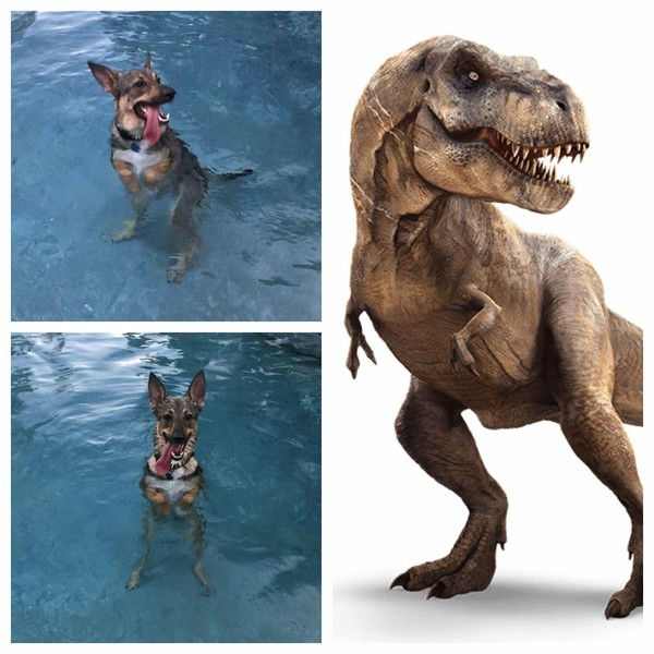 Собака догадалась, что в бассейне можно стоять на задних лапах