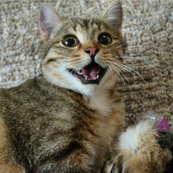От улыбки станет всем светлей кот, улыбка