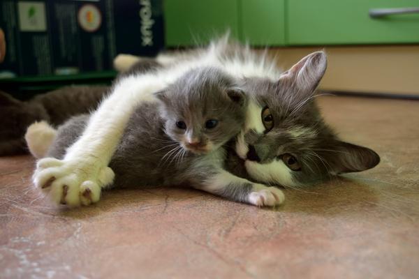 Ищем дом! отдам в хорошие руки, воронеж, Липецк, кот, помощь животным, передержка, длиннопост