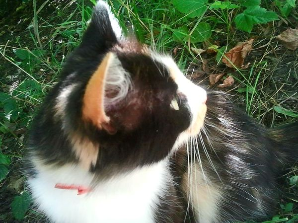 Очень красивая бездомная кошечка в Нижнем Новгороде. кот, помощь животным, Нижний Новгород, длиннопост