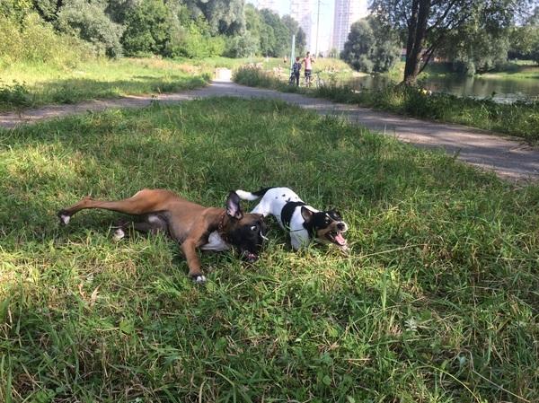 Два дебила - это сила)))!! Собака, выходные, крокодил, Боксерка