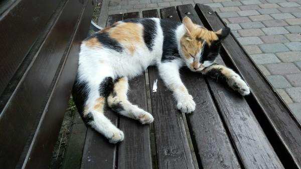 Трёхцветная спала на лавке.
