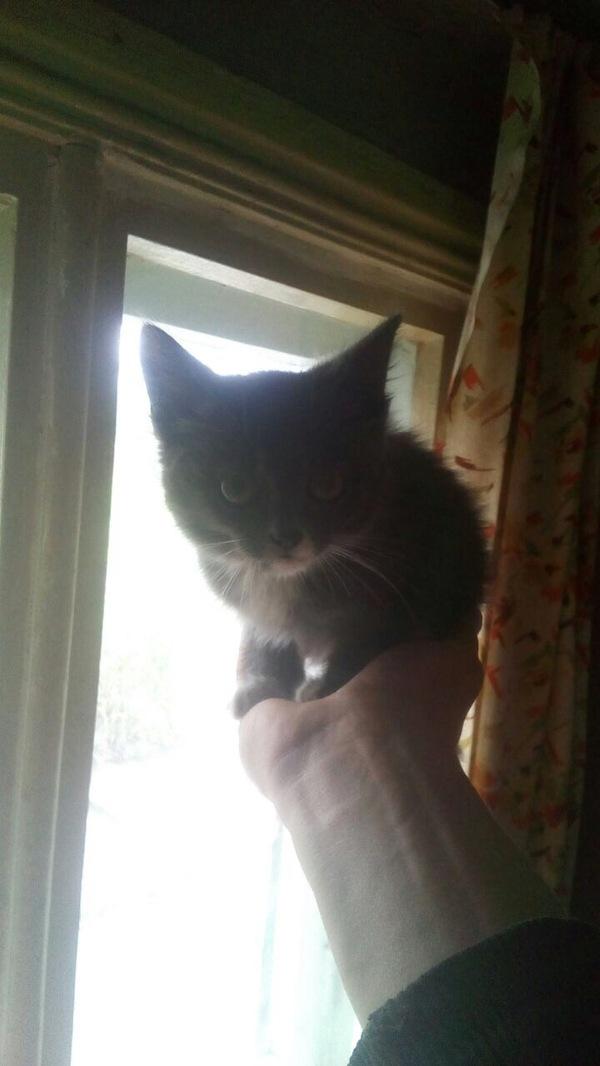 Котик ищет хозяев. Новосибирск котенок ищет семью, кот, отдам в хорошие руки, найденыш, длиннопост