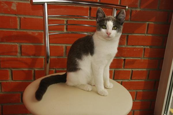 Котята ищут дом, город Омск кот, омск, котики ищут дом, отдам в хорошие руки