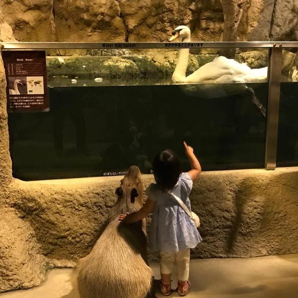 Девочка и ее странный пес