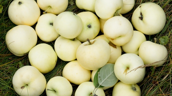 Запах яблок и нарды Детство, нарды, память, ностальгия