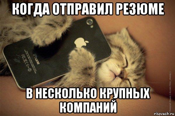 Когда отправил резюме кот, резюме, боль, длиннопост