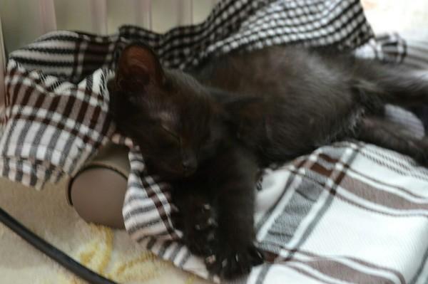 Их есть у меня! Чёрная кошка, кот, было-стало, питомец, приют для животных, длиннопост
