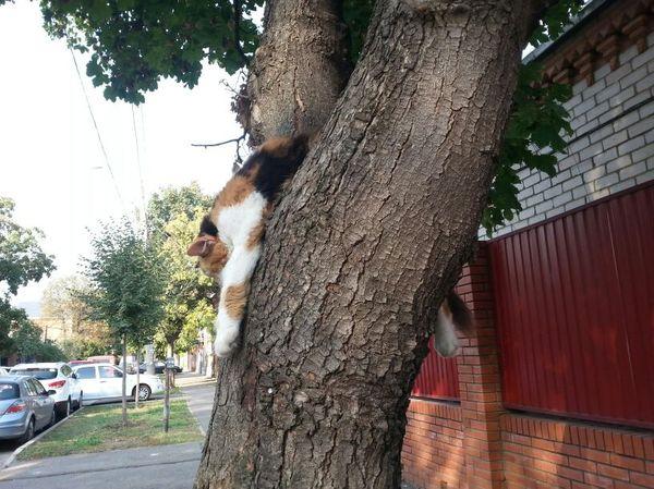 Иду, а тут глядь, кот висит кот, милота, сон, внезапно, животные
