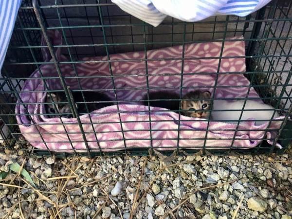 Когда их нашли, два братика крепко обнимали свою маленькую сестричку кот, история спасения котят, как кошка с собакой, длиннопост
