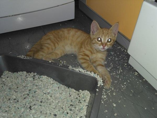 Кто хочет приютить рыжего котёнка-потеряшку? кот, В добрые руки, прелесть, потеряшка, в новый дом, длиннопост