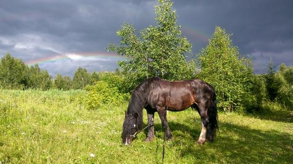 Красота Руси Природа, красота, лошадь, двойная радуга, необыкновенное в природе