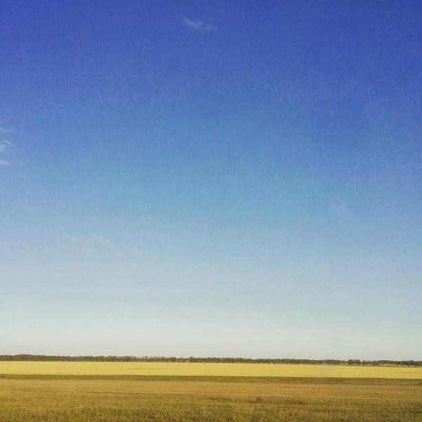 По дороге из Новосибирска дорога домой, поле, новосибирск, кемерово