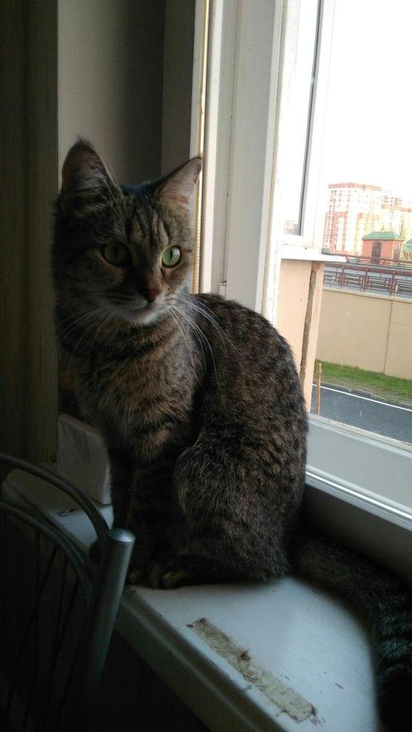 Пропала кошка г. Казань пропажа кошки, казань, кот, пропал кот, помогите найти, длиннопост