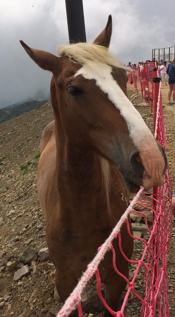 Трампоконь Трамп, лошадь, схожесть