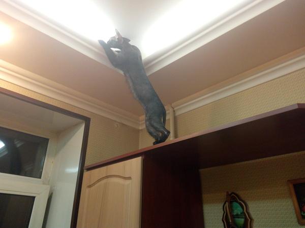 Кошка Бася идет к свету