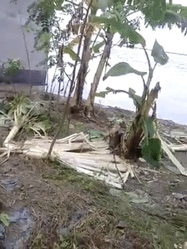 Сила природы
