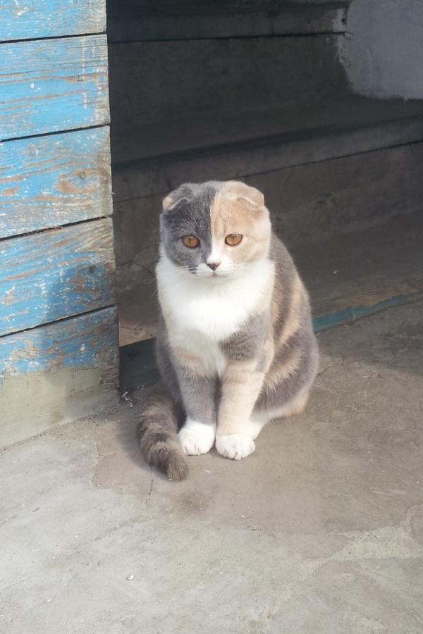 Раздумья пост раздумье, лайк, плюсы и минусы, фотография, не фотошоп, пикабу, кот