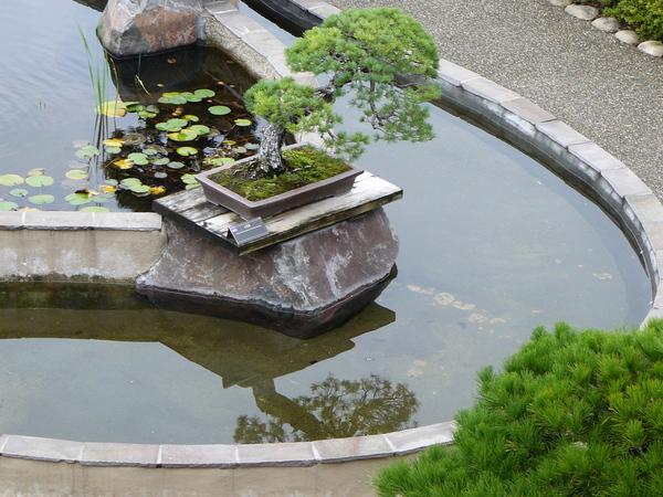 Путешествие по Японии. Оmiya Bonsai Village. япония, бонсай, культура, длиннопост