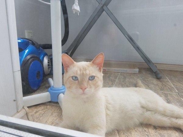 Котик-потеряшка во Владивостоке Животные, Помощь, Помощь животным, Помогите найти, Владивосток, Длиннопост, Кот