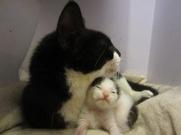 Она сражалась не за свою жизнь, а за своего ребенка кот, история спасения, сражение за жизнь, длиннопост