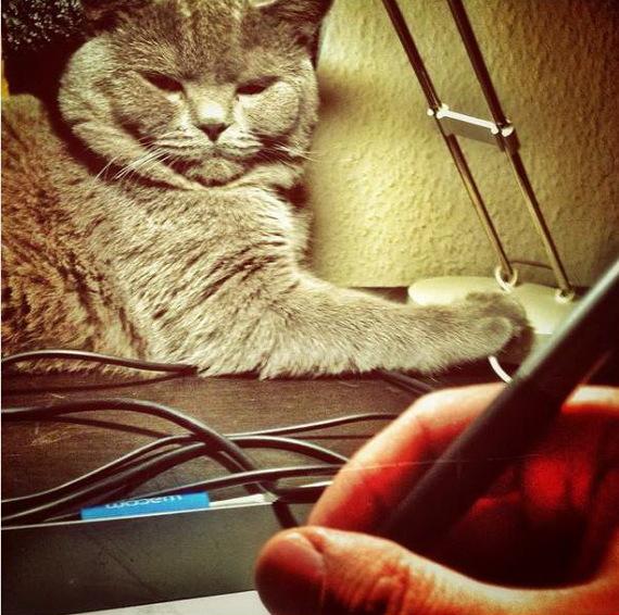 Наблюдатель кот, моё, планшет, котомафия, критика, шерсть