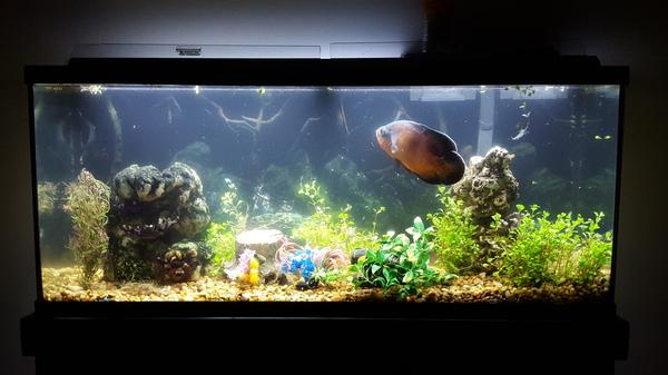 Любимец всей семьи. Рыба, аквариум, что это?, длиннопост