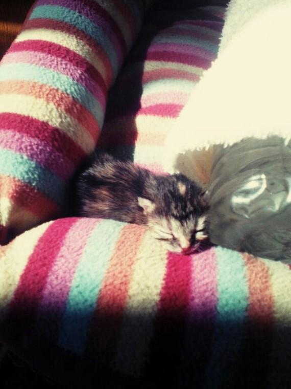 Спасенная из воды. кот, домашние животные, длиннопост, спасение животных