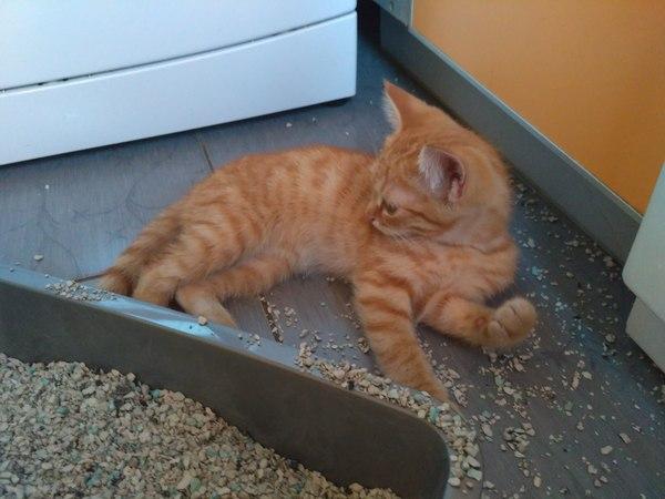 Ищем дом для веселого рыжего котенка кот, в добрые руки, в новый дом, длиннопост