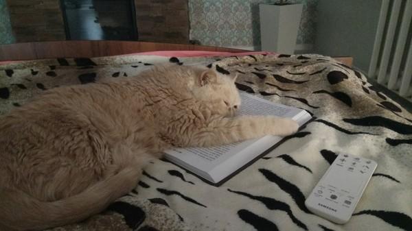 Мои котэ кот, сон, милота