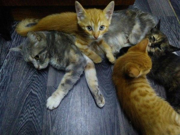 Курск. котейки ищут хозяев отдам в хорошие руки, кот, курск, может кому надо