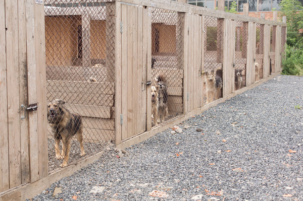 Тайная жизнь не домашних животных моё, Животные, собака и кошка, приют для животных, новосибирск, кот, Собака, длиннопост