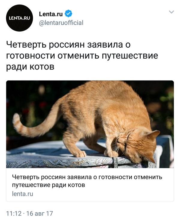 Все ради пушистых кот, пушистый друг, лента
