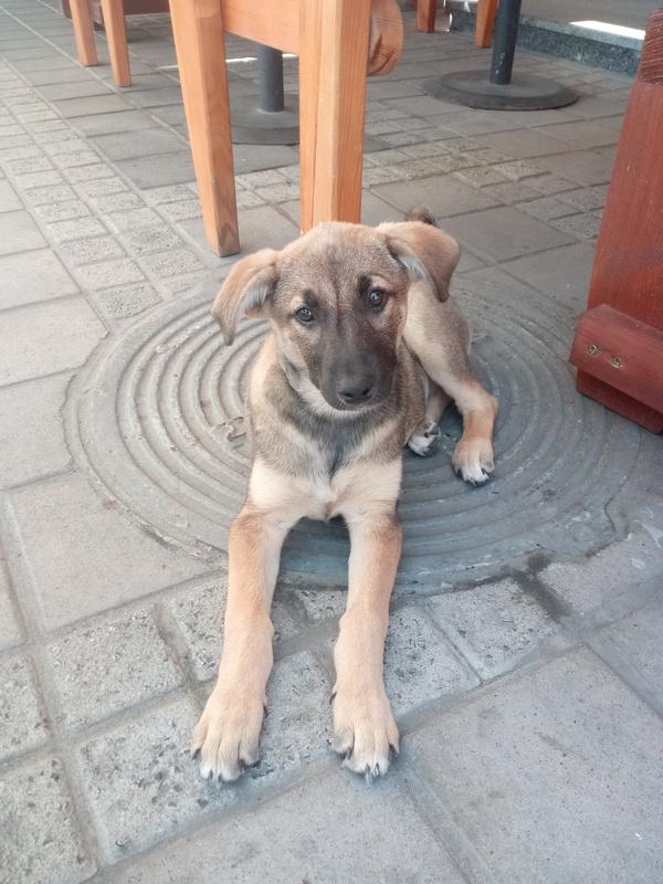 Забери меня к себе Киев, потеряшка, нужен дом, Врятуй пса, сила пикабу, Собака