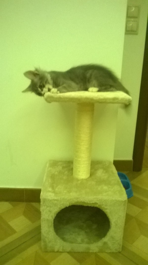 """На волне """"до"""" и """"после"""" для животных кот, найденыш, взросление, длиннопост, домашние животные"""