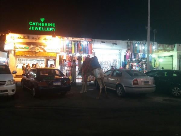 Обычная египетская парковка верблюды, парковка, Египет