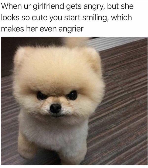 И так всегда 9gag, Собака, отношения, пушистый